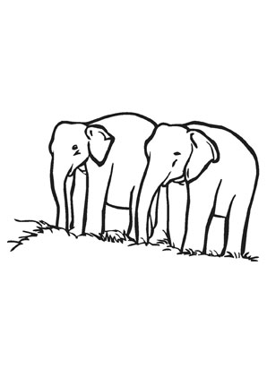 ausmalbilder zwei elefanten - elefanten malvorlagen