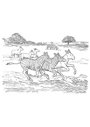 Ausmalbilder Esel In Der Wildnis Esel Malvorlagen