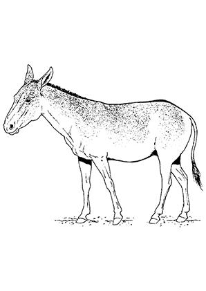 Ausmalbilder Grauer Esel - Esel Malvorlagen