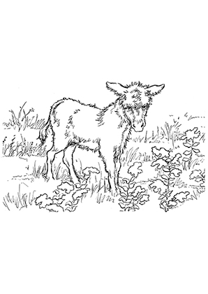 Ausmalbilder Strubeliger Junger Esel Esel Malvorlagen