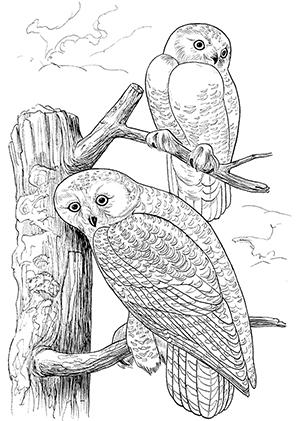 Kleurplaat Owl Ausmalbilder Eulen Auf Aesten Eulen Malvorlagen