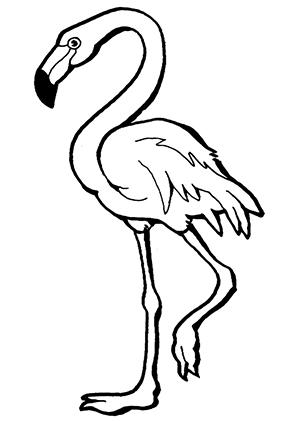 ausmalbilder flamingo beim gehen flamingos malvorlagen. Black Bedroom Furniture Sets. Home Design Ideas