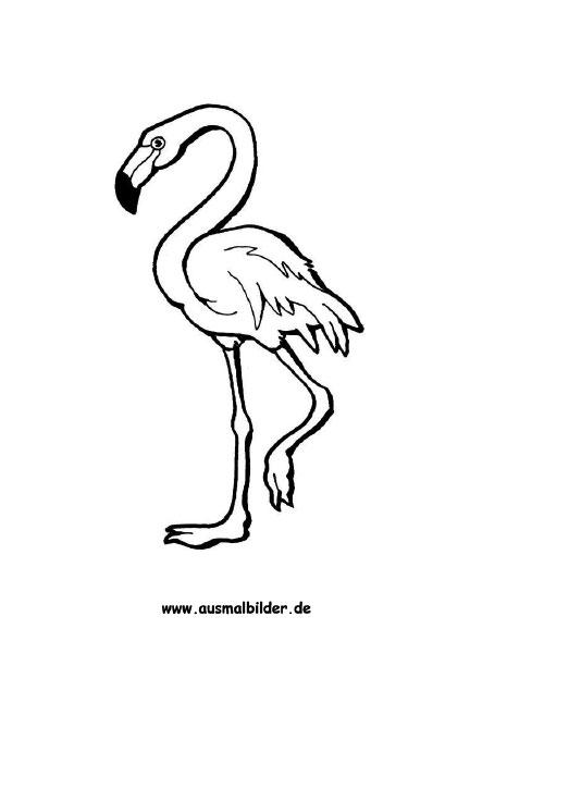 Ausmalbilder Flamingo - Flamingos Malvorlagen