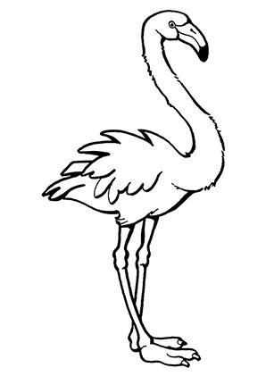 Ausmalbilder Stehender Flamingo - Flamingos Malvorlagen