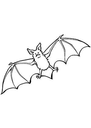 Ausmalbilder Fledermaus im Flug - Fledermäuse Malvorlagen