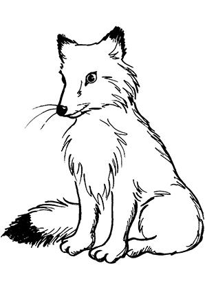 Ausmalbilder Fuchs 2 - Füchse Malvorlagen