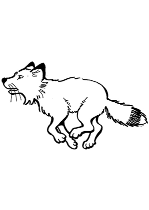 Foxy Lady Fanciful Foxes Coloring Book I Marjorie Sarnat See My