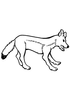 Ausmalbilder Fuchs im Profil - Füchse Malvorlagen