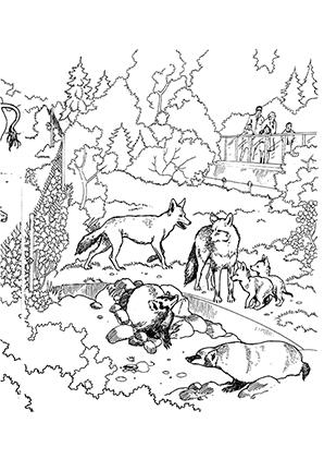 Ausmalbilder Füchse im Zoo - Füchse Malvorlagen