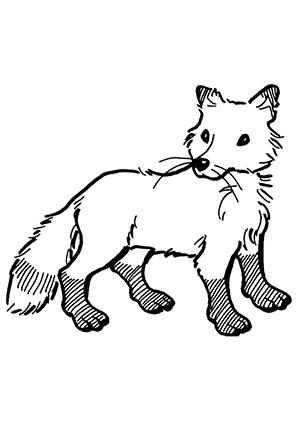 Ausmalbilder Junger Fuchs - Füchse Malvorlagen