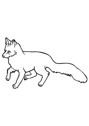 Ausmalbilder Kleiner Fuchs - Füchse Malvorlagen