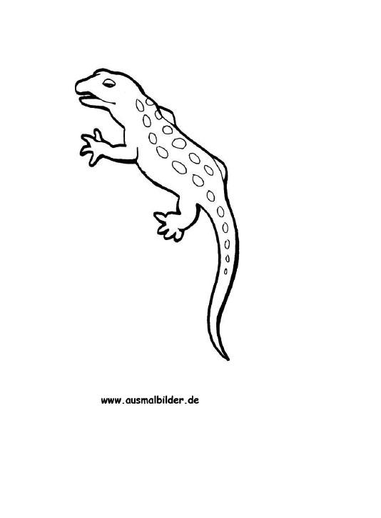 ausmalbilder gecko  gecko malvorlagen