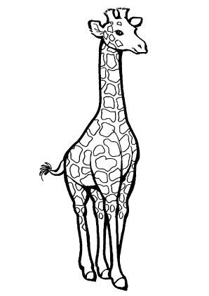 Ausmalbilder Ausgewachsene Giraffe - Giraffen Malvorlagen