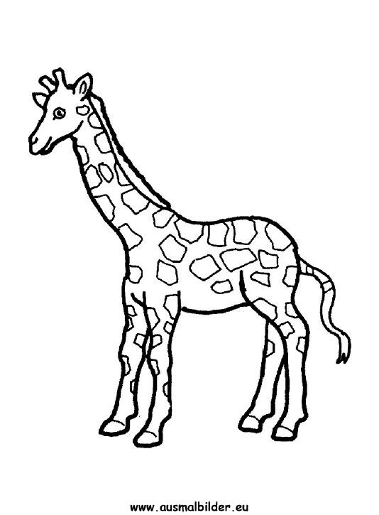 Ausmalbilder Giraffe - Giraffen Malvorlagen