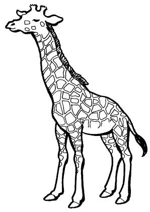 Ausmalbilder Müde Giraffe - Giraffen Malvorlagen