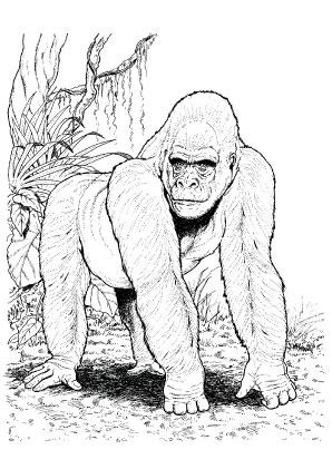 Ausmalbilder Erhabener Gorilla Gorillas Malvorlagen