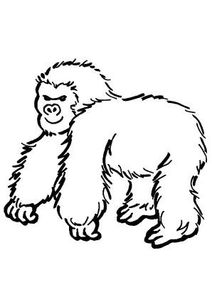 Ausmalbilder Gorilla 2 Gorillas Malvorlagen