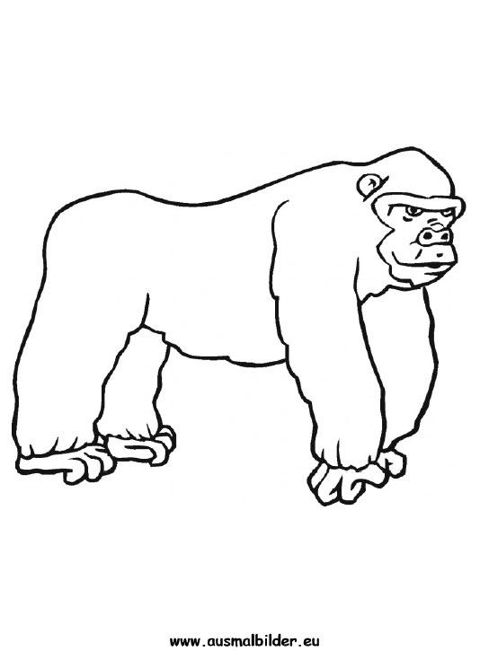 Ausmalbilder Gorilla Gorillas Malvorlagen