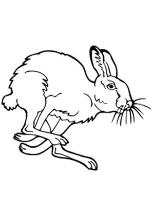 Ausmalbilder Hase 1 - Hasen Malvorlagen