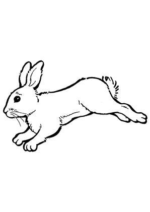 Ausmalbilder Hase im Sprung - Hasen Malvorlagen