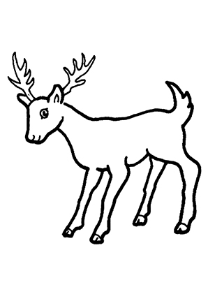 Ausmalbilder Junger Hirsch 2 Hirsche Malvorlagen
