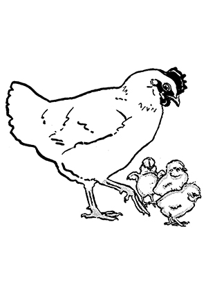 Ausmalbilder Henne 1 - Hühner Malvorlagen
