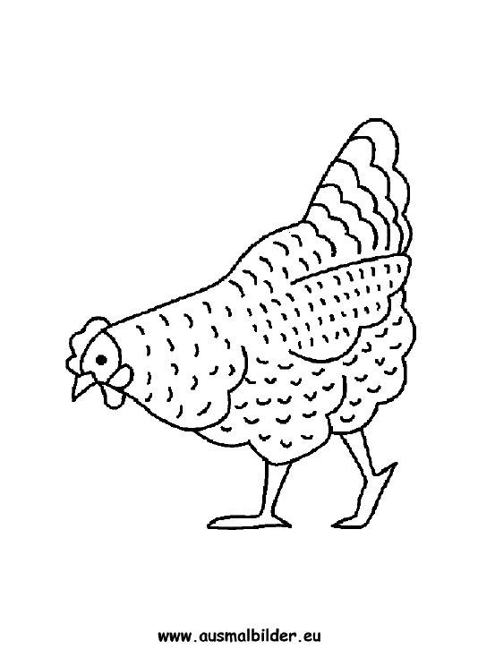 Ausmalbilder Huhn Hühner Malvorlagen