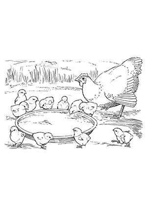 Ausmalbilder Küken werden gefüttert - Hühner Malvorlagen