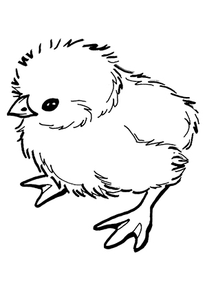 Ausmalbilder Süsses Küken - Hühner Malvorlagen