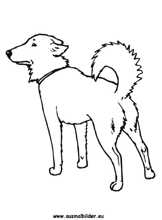 Großzügig Hund Knochen Vorlage Zum Ausdrucken Zeitgenössisch - Entry ...