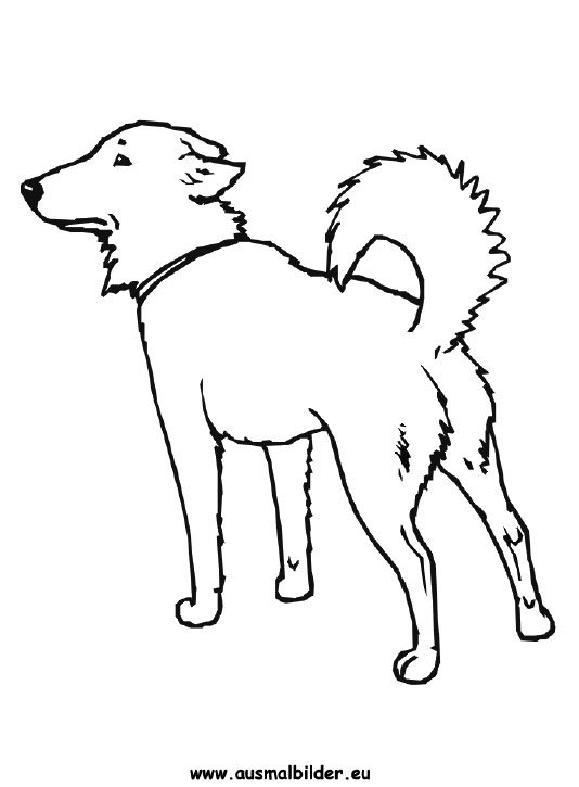 ausmalbilder hund  hunde malvorlagen