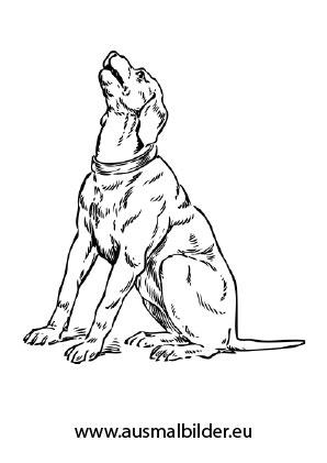 ausmalbilder jaulender hund - hunde malvorlagen