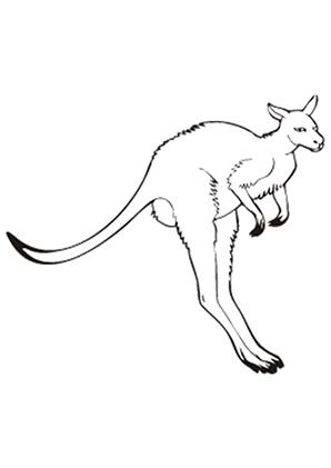 Ausmalbilder Känguru Im Laufen Känguru Malvorlagen