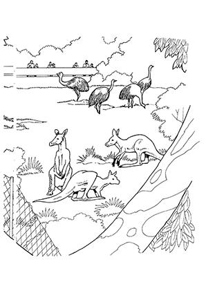 Ausmalbilder Kängurus Im Zoo Känguru Malvorlagen