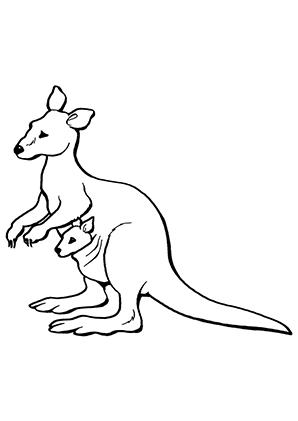 Ausmalbilder Känguruweibchen Känguru Malvorlagen