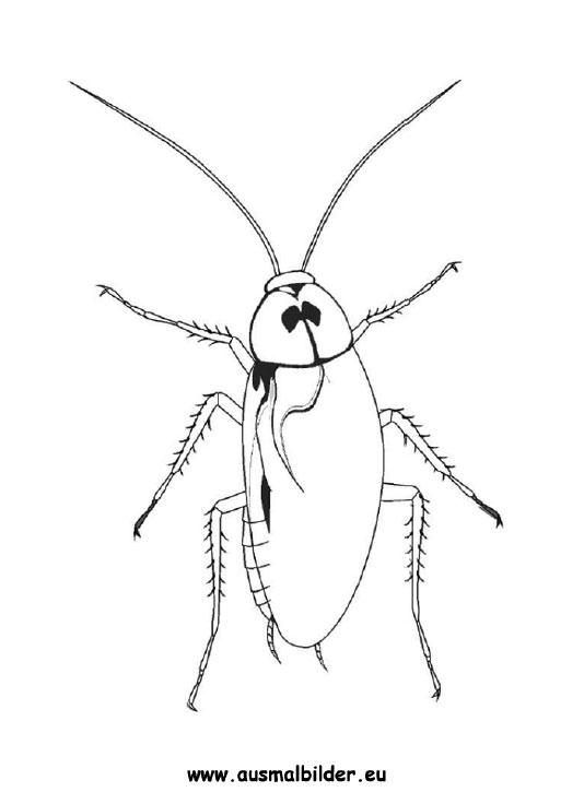 Ausmalbilder Kakerlake Kakerlaken Malvorlagen