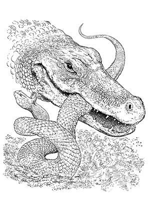 Ausmalbilder Krokodil Kämpft Mit Schlange Krokodile Malvorlagen