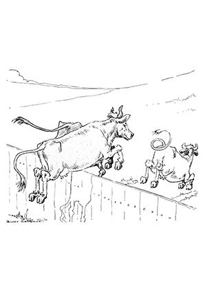 ausmalbild kühe laufen weg zum ausdrucken