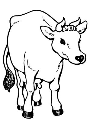 ausmalbilder kuh 2 - kühe malvorlagen