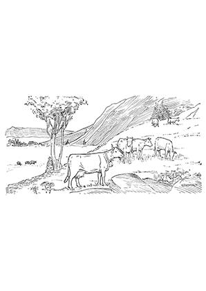 Ausmalbilder Kuh auf der Weide - Kühe Malvorlagen