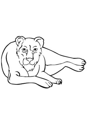 ausmalbilder beobachtender löwe - löwen malvorlagen