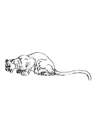 ausmalbilder sprungbereite löwin - löwen malvorlagen