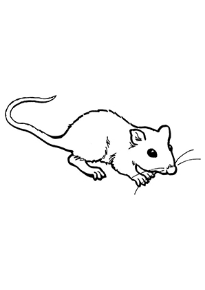 Ausmalbilder Maus 2 Mäuse Malvorlagen
