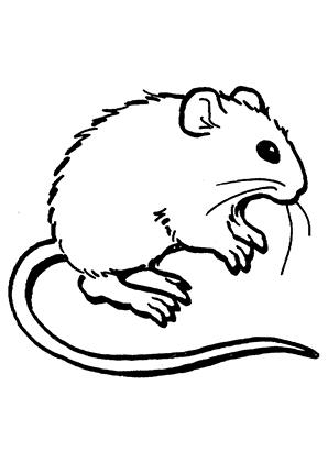 Ausmalbilder Maus 4 Mäuse Malvorlagen