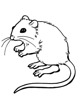 Ausmalbilder Maus 5 - Mäuse Malvorlagen