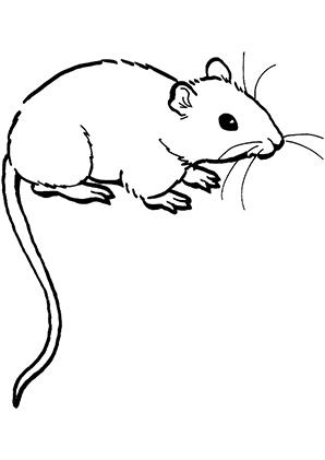 Ausmalbilder Maus 6 - Mäuse Malvorlagen