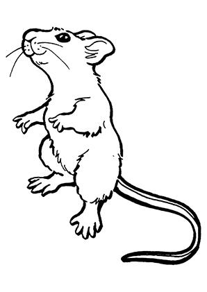 Ausmalbilder Neugierige Maus - Mäuse Malvorlagen
