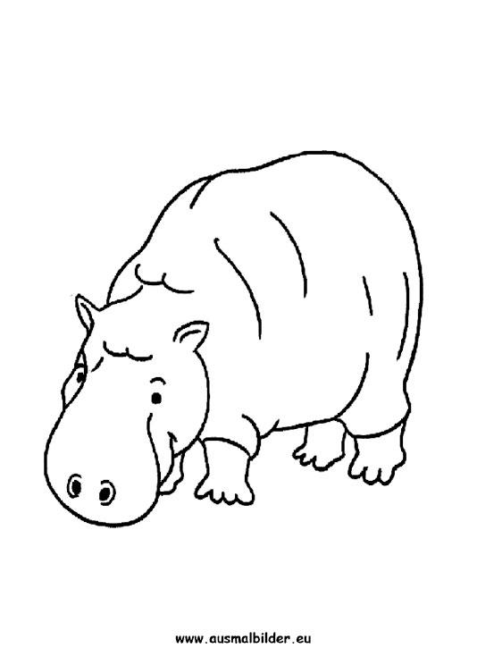 ausmalbilder nilpferd  nilpferde malvorlagen