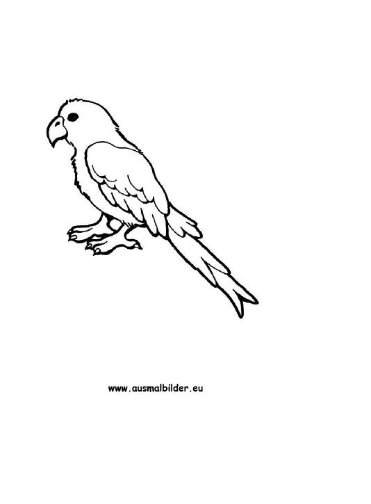 Ausmalbilder Papagei Papageien Malvorlagen