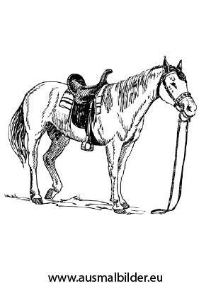 Ausmalbilder Altes Pferd Pferde Malvorlagen